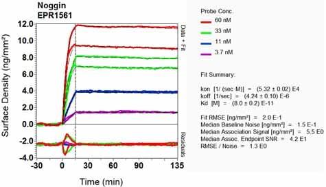 Other - Anti-Noggin antibody [EPR1561] (ab124977)