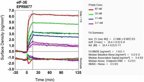 Other - Anti-eIF3e antibody [EPR6877] (ab125033)