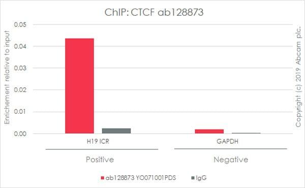 ChIP - Anti-CTCF antibody [EPR7314(B)] (ab128873)