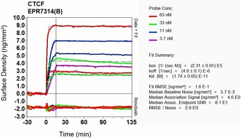 Other - Anti-CTCF antibody [EPR7314(B)] (ab128873)
