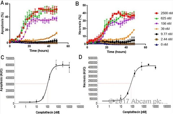 Kinetic Apoptosis and Necrosis Analysis of HT1080 cells