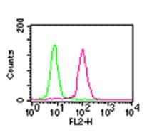 Flow Cytometry - Anti-NF-kB p65 [112A1021] antibody (ab13594)