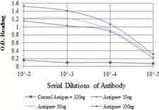 ELISA - Anti-BCRP/ABCG2 antibody [1H2] (ab130244)