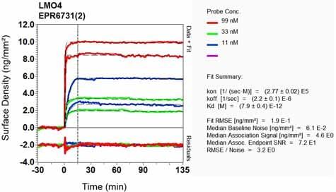 Other - Anti-LMO4 antibody [EPR6731(2)] (ab131030)