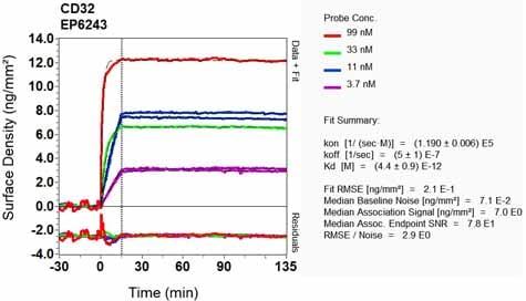 Other - Anti-CD32B + CD32A + CD32C antibody [EP6243] (ab131051)
