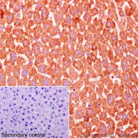 Immunohistochemistry (Formalin/PFA-fixed paraffin-embedded sections) - Anti-Cytochrome C antibody [EPR1327] (ab133504)