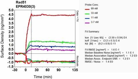 OI-RD扫描-抗Rad51抗体[EPR4030(3)](ab133534)