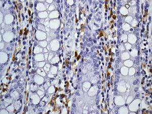 Immunohistochemistry (Formalin/PFA-fixed paraffin-embedded sections) - Anti-CD4 antibody [EPR6855] (ab133616)