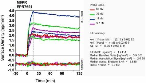 OI-RD Scanning - Anti-M6PR (cation dependent) antibody [EPR7691] (ab134153)