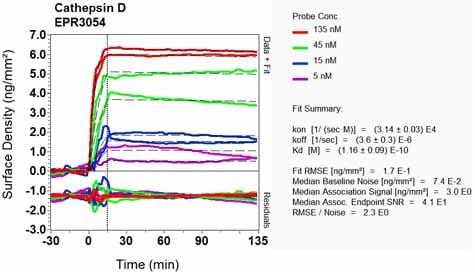 OI-RD Scanning - Anti-proCathepsin D antibody [EPR3054] (ab134169)