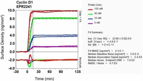 其他抗细胞周期蛋白D1抗体[EPR2241] -C-末端(AB134175)