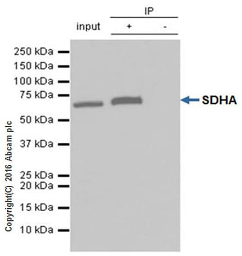 Immunoprecipitation - Anti-SDHA antibody [EPR9043(B)] (ab137040)
