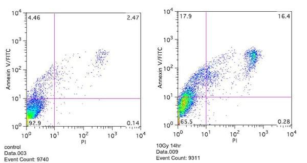 Functional Studies - Annexin V-FITC Apoptosis Detection Kit (ab14085)