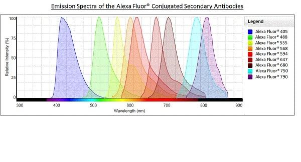 Alexa Furor®山羊抗兔IgG H&L(Alexa Furor®555)预吸附(AB1500)