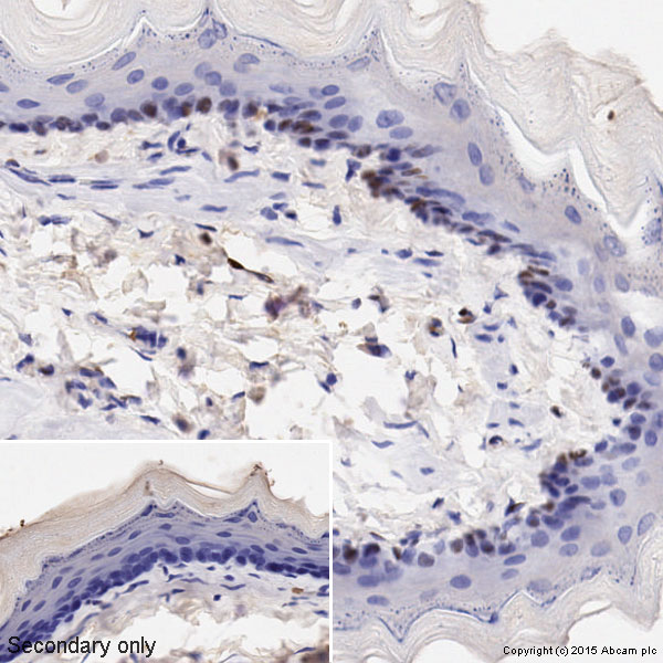Immunohistochemistry (Paraffin-embedded sections) - Anti-Cyclin D1 antibody [SP4] (ab16663)