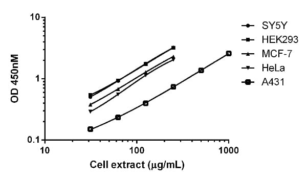Comparison of SIRT1 expression in different cell lines