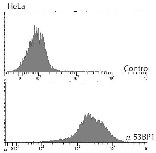 Flow Cytometry - Anti-53BP1 antibody (ab172580)
