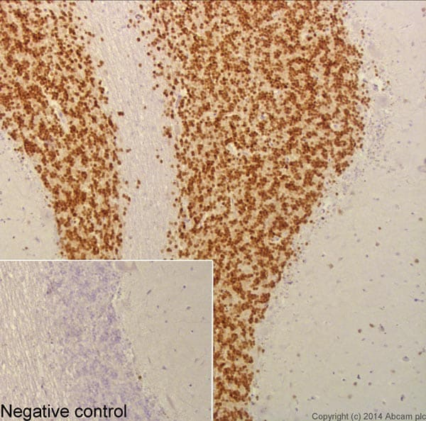 Immunohistochemistry (Formalin/PFA-fixed paraffin-embedded sections) - Anti-NeuN antibody [EPR12763] - Neuronal Marker (ab177487)