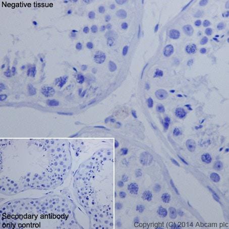 免疫组织化学(福尔马林/PFA固定石蜡切片)-抗Oct4抗体[EPR17929]-芯片级(ab181557)