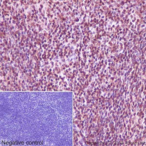 Immunohistochemistry (Formalin/PFA-fixed paraffin-embedded sections) - Anti-GAPDH antibody [EPR16891] - Loading Control (ab181602)