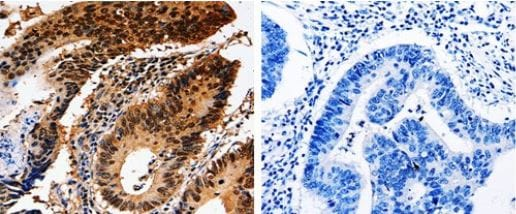 Immunohistochemistry (Paraffin-embedded sections) - Anti-14-3-3 epsilon antibody (ab182656)