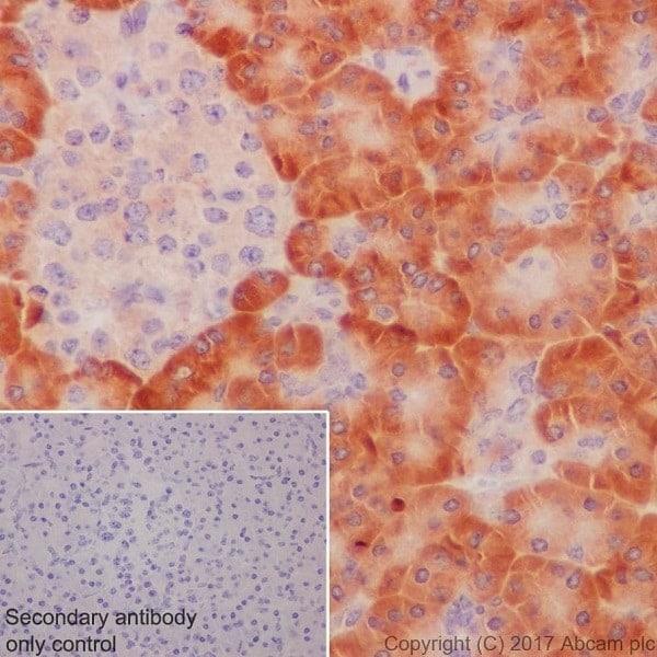 Immunohistochemistry (Formalin/PFA-fixed paraffin-embedded sections) - Anti-Apg7 antibody [EPR20384] (ab183188)