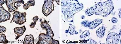 Immunohistochemistry (Formalin/PFA-fixed paraffin-embedded sections) - Anti-TNF Receptor I antibody (ab19139)