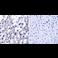 Immunohistochemistry (Formalin/PFA-fixed paraffin-embedded sections) - Anti-TRAP1 antibody [TRAP1-6] (ab2721)