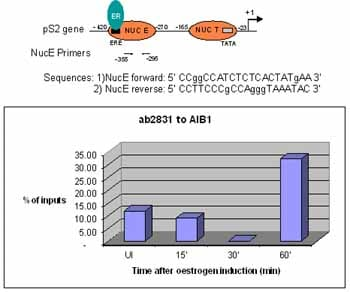 ChIP - Anti-SRC3 antibody - ChIP Grade (ab2831)