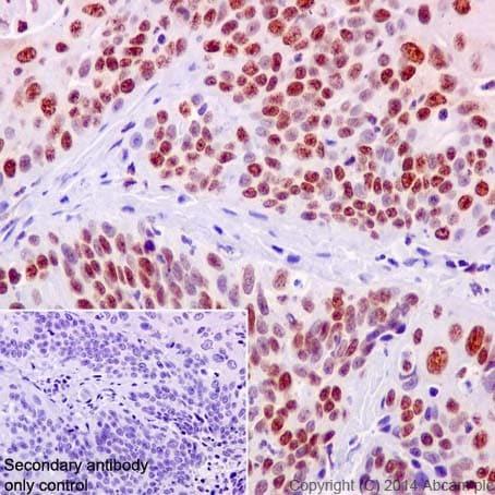 Immunohistochemistry (Formalin/PFA-fixed paraffin-embedded sections) - Anti-KAT8 / MYST1 / MOF antibody [EPR15803] (ab200660)
