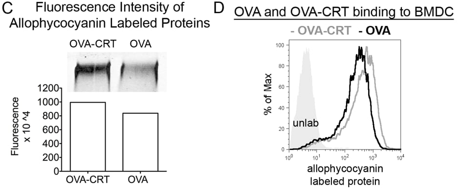 APC Conjugation Kit - Lightning-Link® labeling OVA and OVA-CRT for in-gel Fluorescence and Flow cytometry