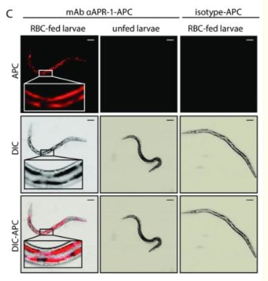 APC Conjugation Kit - Lightning-Link