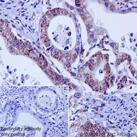 Immunohistochemistry (Formalin/PFA-fixed paraffin-embedded sections) - Anti-HADHA antibody [EPR17940] (ab203114)