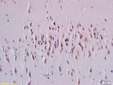 Immunohistochemistry (Formalin/PFA-fixed paraffin-embedded sections) - Anti-Rab24 antibody (ab214217)