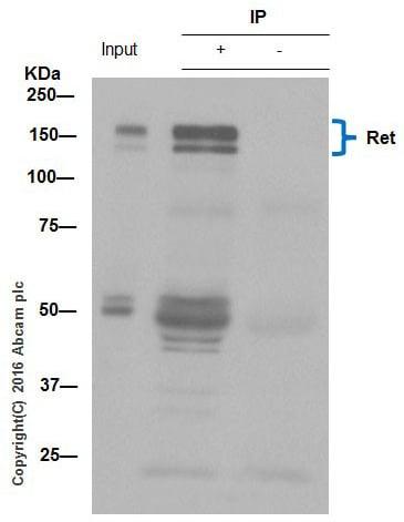 免疫沉淀-抗Ret抗体[EPR2871]-BSA和叠氮(ab214791)