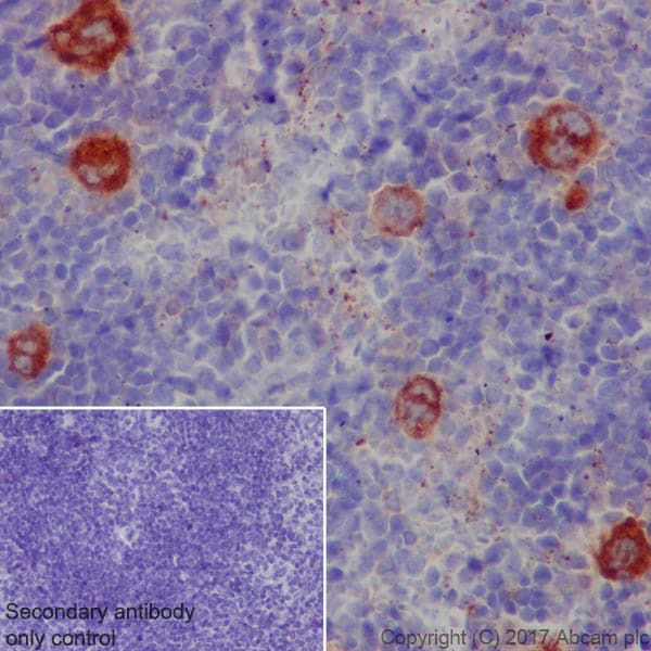 Immunohistochemistry (Formalin/PFA-fixed paraffin-embedded sections) - Anti-TGF beta 1 antibody [EPR21143] (ab215715)