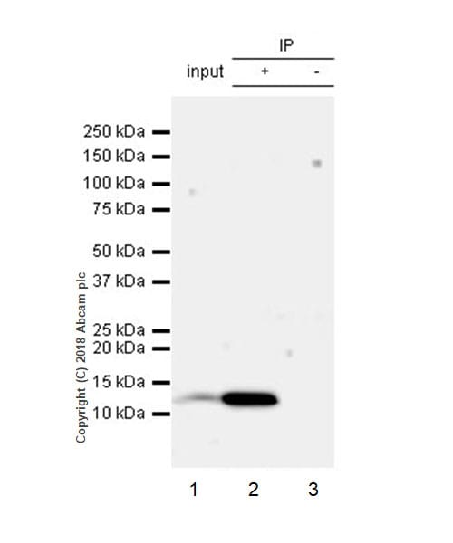 Immunoprecipitation - Anti-beta 2 Microglobulin antibody [EPR21752-214] (ab218230)