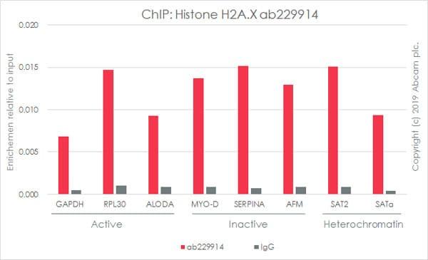 ChIP - Anti-Histone H2A.X antibody [EPR22820-23] - ChIP Grade (ab229914)