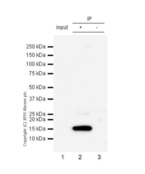 Immunoprecipitation - Anti-Histone H2A.X antibody [EPR22820-23] - ChIP Grade (ab229914)