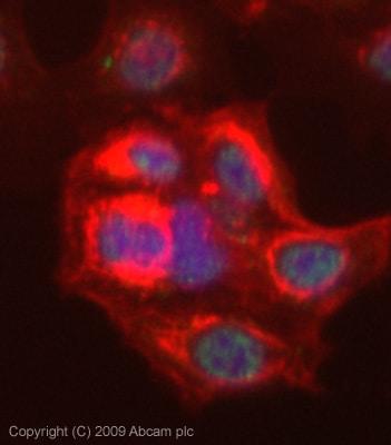 Immunocytochemistry/ Immunofluorescence - Anti-KAT5 / Tip60 antibody (ab23886)