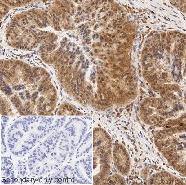 Immunohistochemistry (Formalin/PFA-fixed paraffin-embedded sections) - Anti-ERK2 antibody [1B3B9] (ab231085)