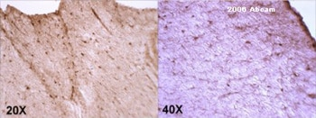 Immunohistochemistry (Frozen sections) - Anti-MD2 antibody (ab24182)