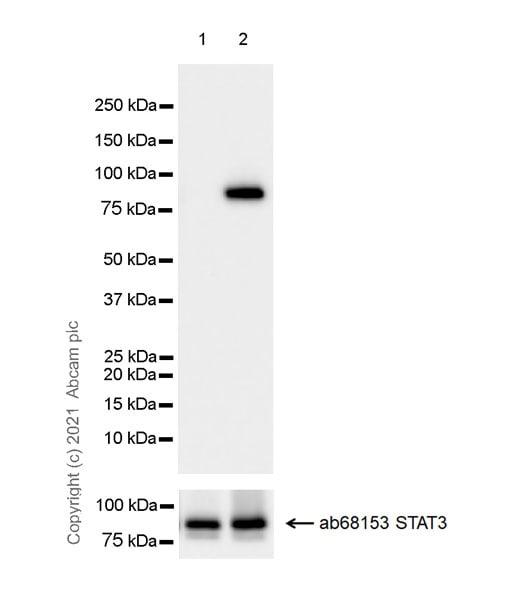 Western blot - Anti-STAT3 (phospho Y705) antibody [EPR23968-52] (ab267373)