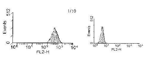 Flow Cytometry - PE Anti-EGFR antibody [ICR10] (ab27764)