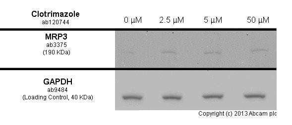 Western blot - Anti-MRP3 antibody [M3II-9] (ab3375)