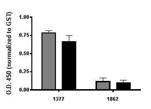 ELISA - Anti-GST antibody (HRP) (ab3416)