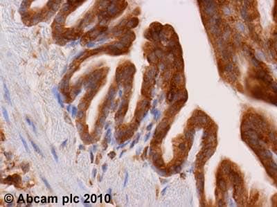 Immunohistochemistry (Formalin/PFA-fixed paraffin-embedded sections) - Anti-Dynamin 2 antibody (ab3457)