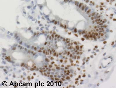 Immunohistochemistry (Formalin/PFA-fixed paraffin-embedded sections) - Anti-mSin3A antibody - ChIP Grade (ab3479)