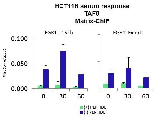 ChIP - Anti-TAF9 antibody (ab30963)
