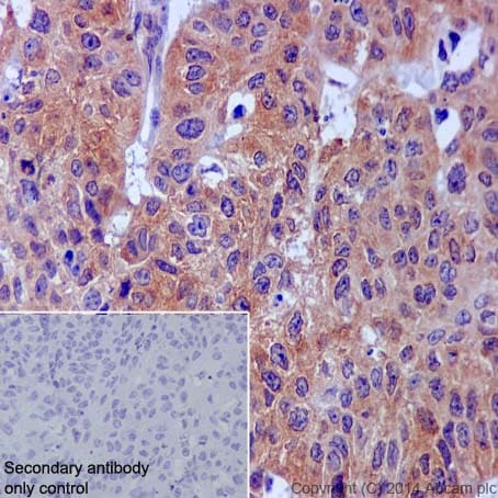 Immunohistochemistry (Formalin/PFA-fixed paraffin-embedded sections) - Anti-AMPK alpha 1 antibody [Y365] (ab32047)
